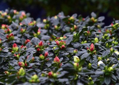 Détail dans les serres - Gardet horticulture
