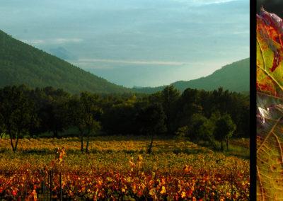 CourtinCom-photographie-Vigne en automne dans le Var