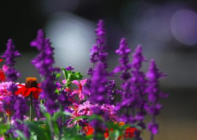 CourtinCom-photographie jardinière arrière pays niçois