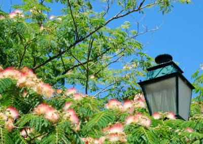 CourtinCom-photographie-le reverbère posé sur un arbre