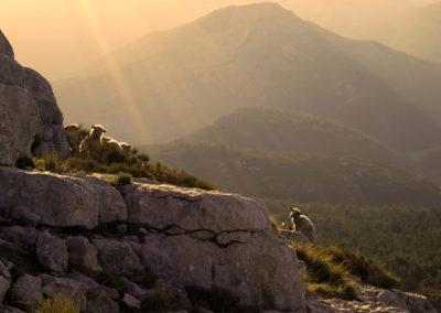 CourtinCom-photographie mont Lachens à l'aube
