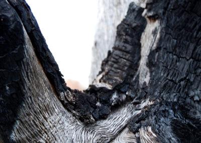 Courtincom - photographie bois brulé