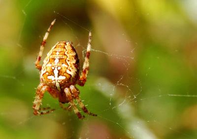 Photographie-Une araignée dans les champs