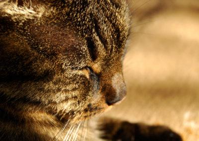 Photographie-chat se réchauffant au soleil-1