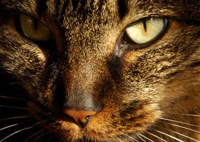 Photographie-chat se réchauffant au soleil-2