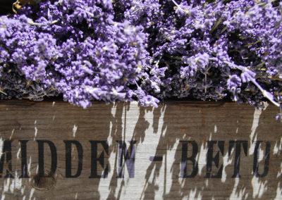 Courtincom-Photographie-caisse de provence-lavandes