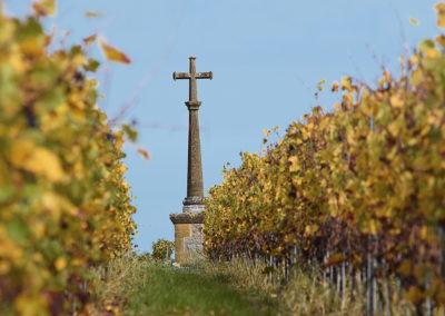 Reportage photographique-Vignoble Perras-La croix