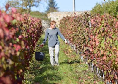 Reportage photographique-Vignoble Perras-Recolte du raisin en famille
