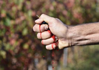 Reportage photographique-Vignoble Perras-grappe préssée